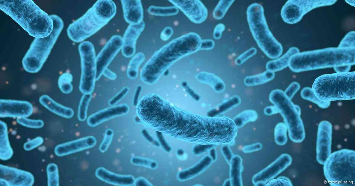Everything you should know about listeriosis in pregnancy