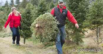 Canada grapples with shortage of Christmas trees and high prices