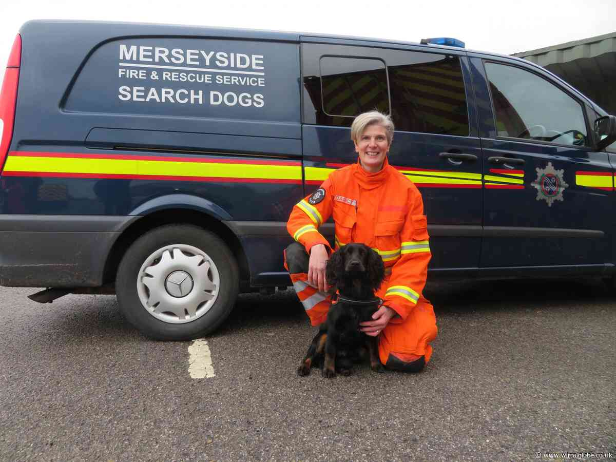 Cocker spaniel Scout completes first search and rescue mission