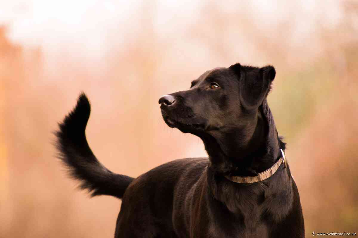 Confirmed case of Alabama Rot in Wallingford, Oxfordshire