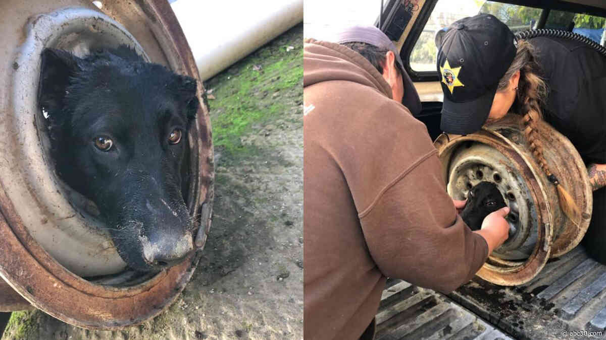 Dog found with head stuck in wheel rim rescued