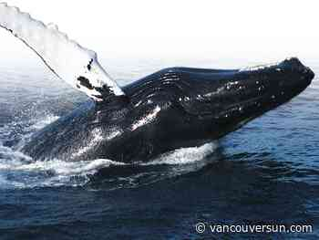 Whale-watching operator who got too close to humpback nets $2,000 fine