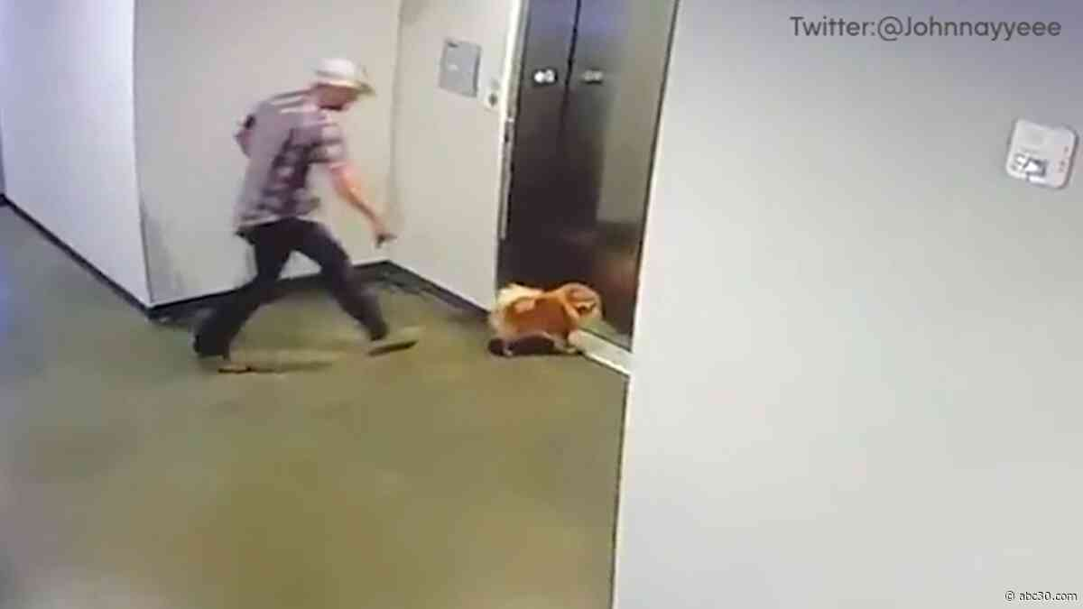 Video shows man rescue dog when leash stuck in elevator doors
