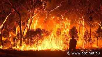 Dire warning for NSW after Amazon fires