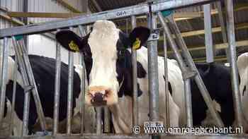 Melkveehouders slepen Rabobank voor de rechter, acht van hen komen uit Brabant