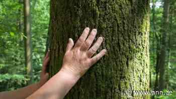 Rostock pflanzt für fast 100.000 Euro neue Bäume