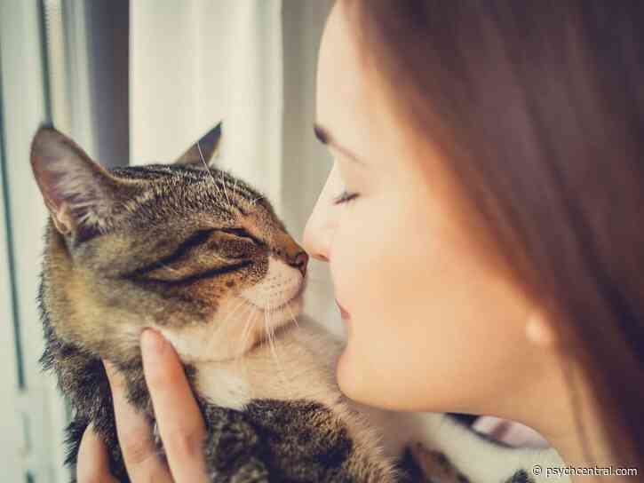Are You a Natural Cat Whisperer?