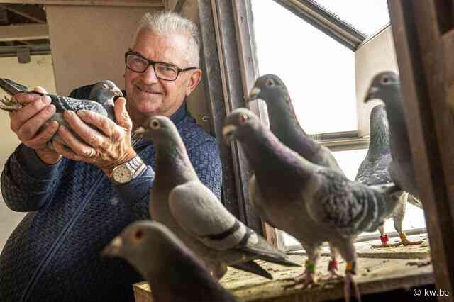 """Hoe Joël Verschoot de Eddy Merckx van de duivensport werd: """"Armando zette mijn leven op zijn kop"""""""