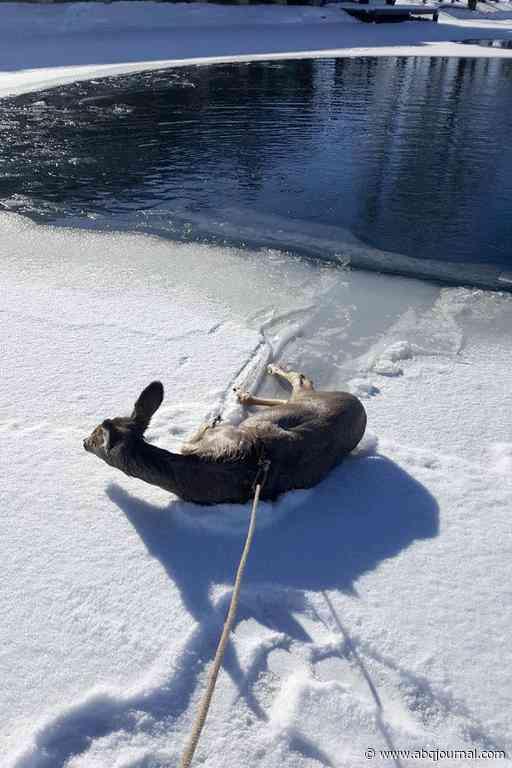 Wyoming deputies lasso deer that fell through iced-over pond