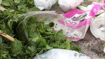 Reduce holiday food waste