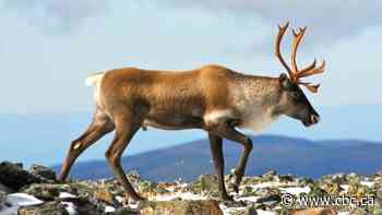 A conservation group criticized Quebec over caribou. So the province cut ties with it