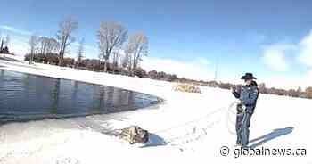Video shows Wyoming deputies rescuing deer from ice-covered pond