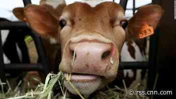 World must reach 'peak meat' by 2030
