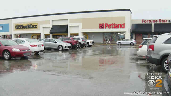 'They're Not Being Honest With The Customers': Local Activists Accuse Petland Of Selling Dogs From Puppy Mills