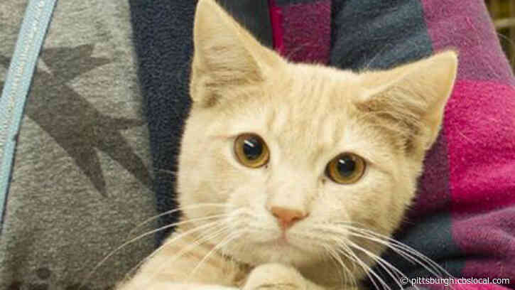 Animal Friends Waiving Requested Adoption Donation During Final Weeks Of December For Cats 1 Year And Older