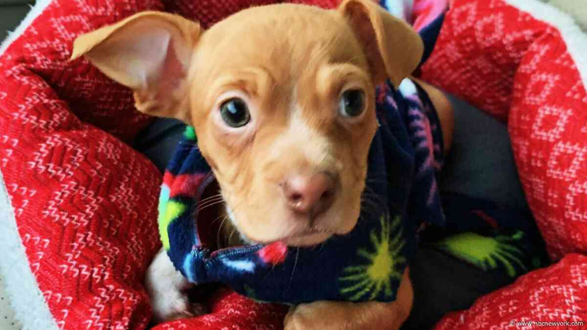 Who Threw This Puppy From a Moving Car? $2,000 Reward Offered for Info