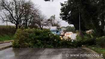 A Roma tanto vento ma (per ora) nessuna tempesta: caduti alcuni alberi, sul litorale raffiche a 100 km/h