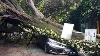 Cassia, albero crolla e distrugge un'auto