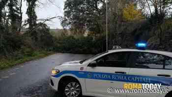 Roma, vento da paura: alberi caduti e danni alle auto. Tra città e provincia 100 interventi