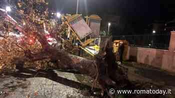 Roma, vento da paura: alberi caduti e danni alle auto. Tra città e provincia 360 interventi