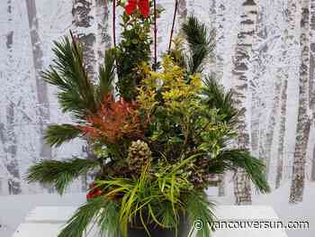 Brian Minter: Pots of winter greenery for the mild winter ahead