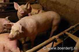 Varkensprijs gaat flink omlaag