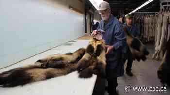 North West Company reverses decision to stop buying fur