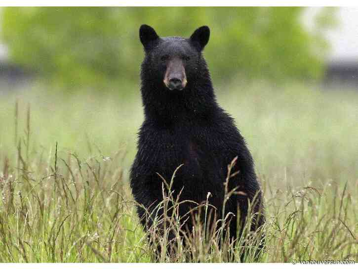 Saluting the best B.C. animals of 2019: Here are the nominees for worst bear