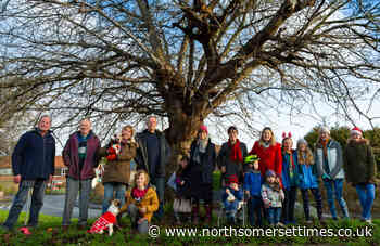 Council gives beloved strawberries and cream tree protected status
