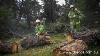 'Mum's a firefighter': the women battling bushfires