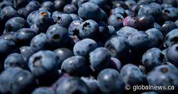 Wild blueberries: Nova Scotia pushing for product innovations