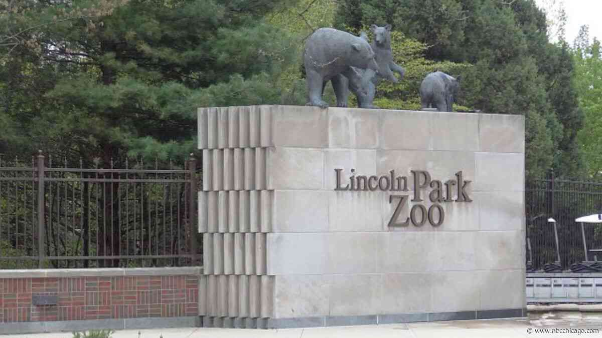 Lions at Chicago Zoo Getting A New $15M Home