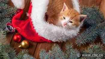 Keep kitty away from the tinsel: A vet's top tips for a pet-safe holiday season