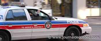 Ontario: enquête sur un vol de 19 chiots