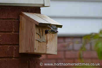 Christmas bird survey in Congresbury and Yatton