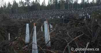 Clearcutting B.C. forests contributing more to climate change than fossil fuels: report