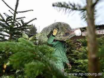 Retter wecken schlafenden Weihnachtsbaum-Verkäufer