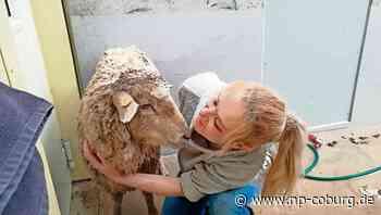 *** Happy End für Schaf in Not