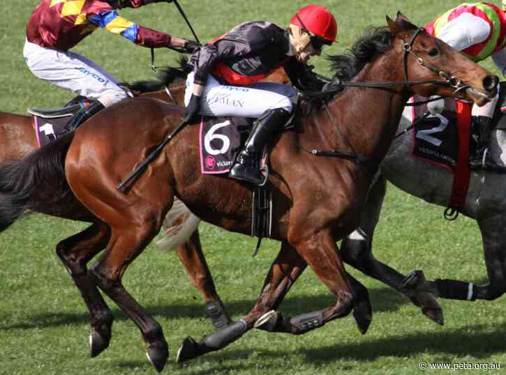 Whip Welts on Melbourne Cup Winner Prompt PETA to Call For Whipping Ban