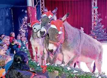 Untersiemau: Weihnachtsstimmung in der Manege