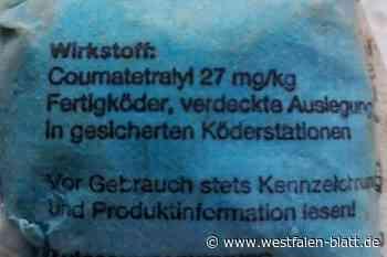 Paderborn: Giftköder im Garten entdeckt