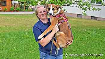 Lärm setzt Tieren zu: BRK-Hundestaffel ruft zum Böllerverzicht auf