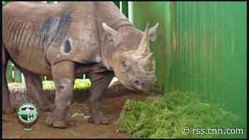 World's oldest rhino in Tanzania is dead