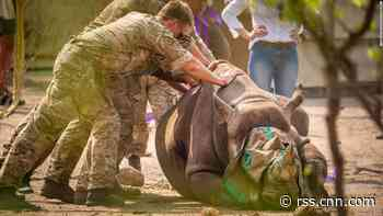 Endangered black rhinos relocated to Malawi by British troops