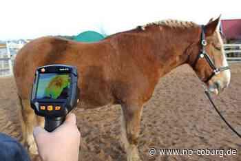*** Mit Wärmebildern Verletzungen bei Pferden schnell erkennen