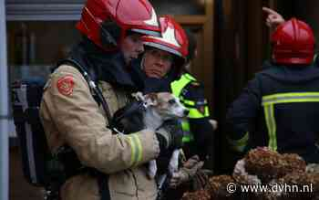 Brandweer redt hondjes bij woningbrand Veendam