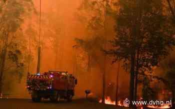 Drenten en Groningers in Australië: 'bosbranden zijn bijna niet te bevatten, zo groot en zo intens'