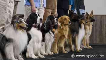 Jobprotokoll: Hundetrainerin erzählt aus ihrem Alltag