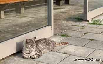Zoey is terecht: de stationspoes van Winsum gevonden in Wehe-den Hoorn