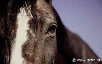 Pas op voor paarden op de weg tussen Schoonloo en Papenvoort